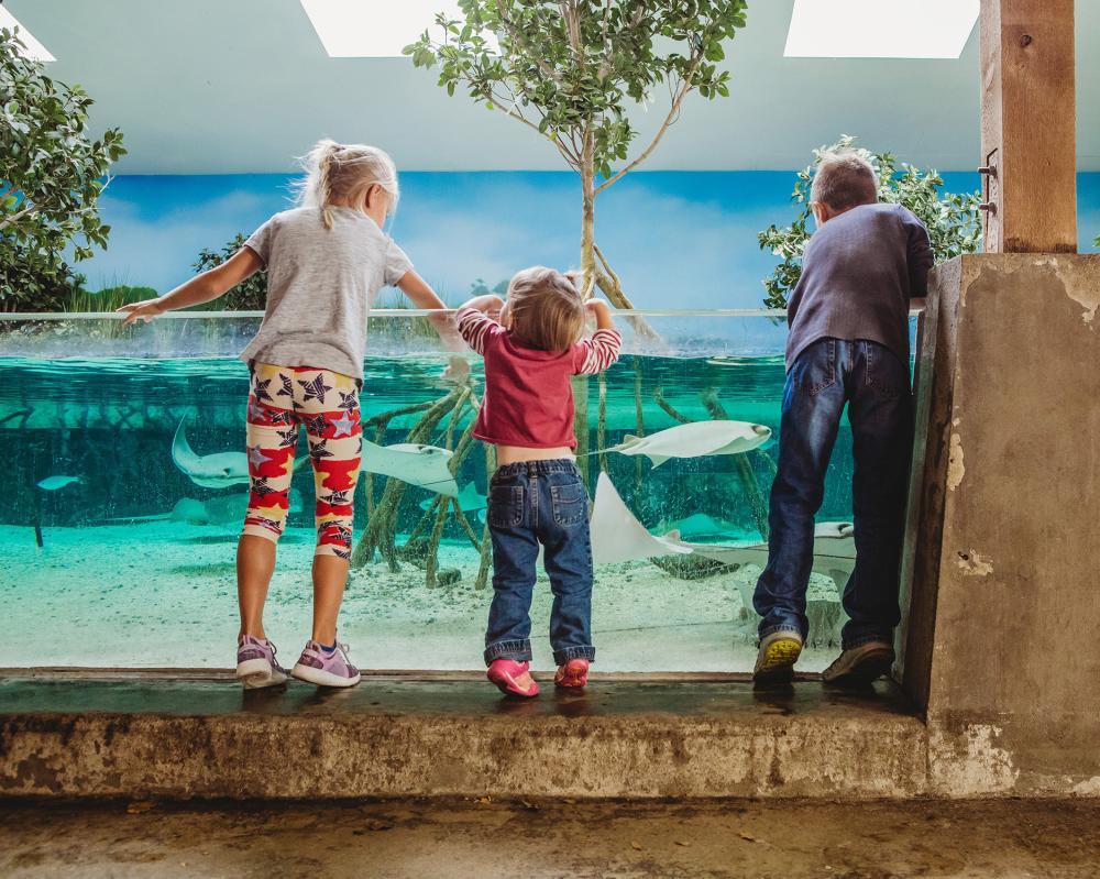 Children petting stingrays at the Stingray Bay exhibit at Fort Wayne's Children's Zoo in Fort Wayne, Indiana