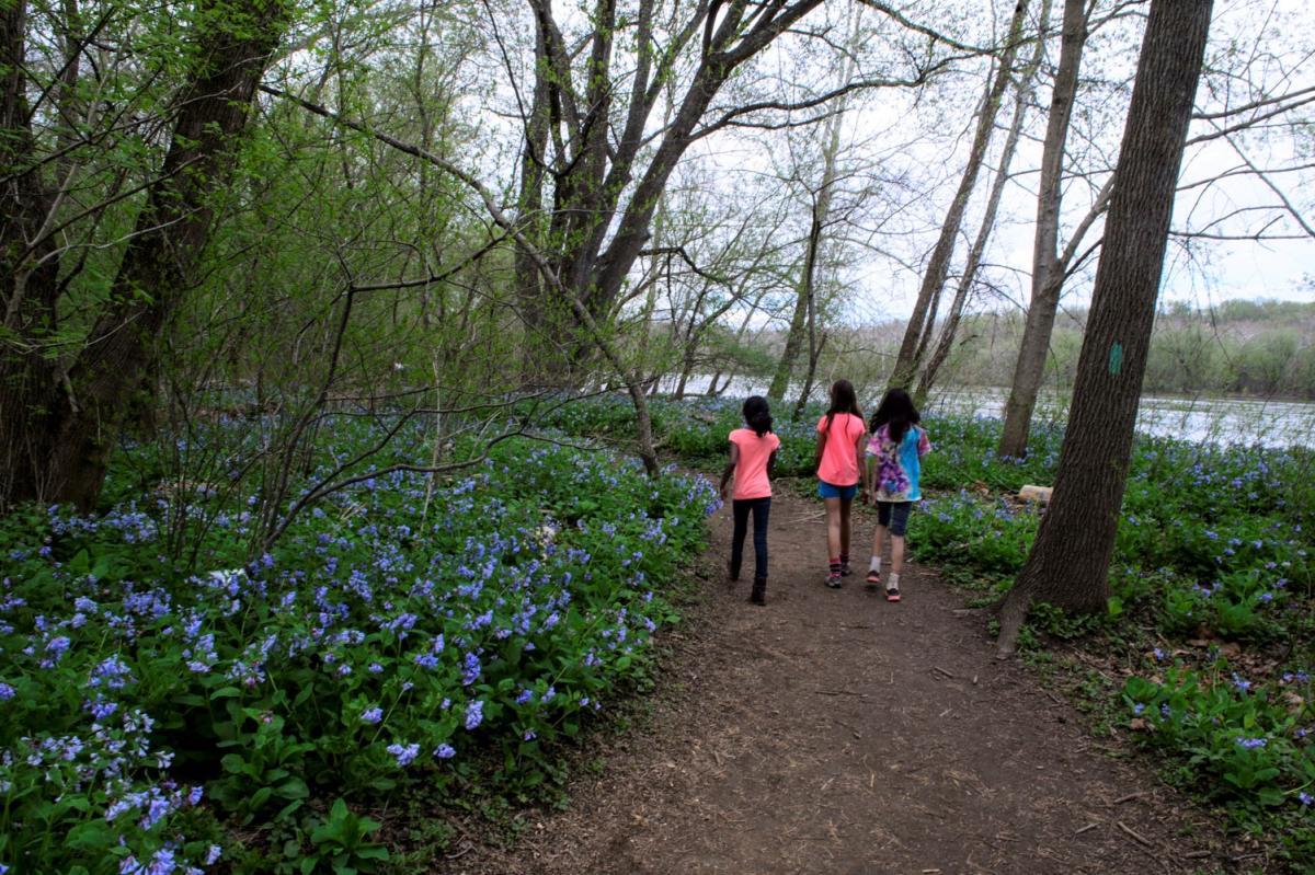 Riverbend Park, Bluebells