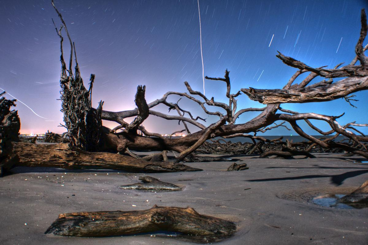 Driftwood Beach in the Evening In Georgia's Golden Isles