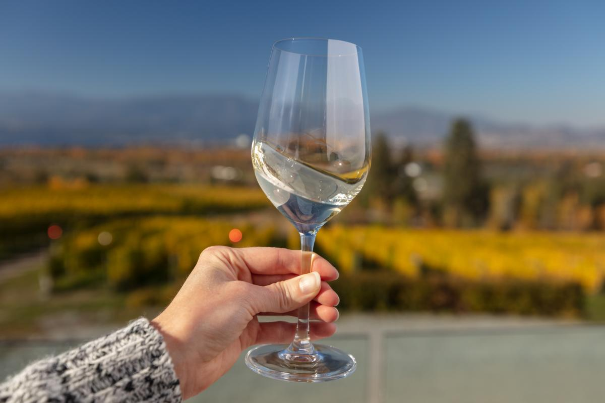 A woman's hand holding a glass of white wine; background is a blurred vineyard in fall