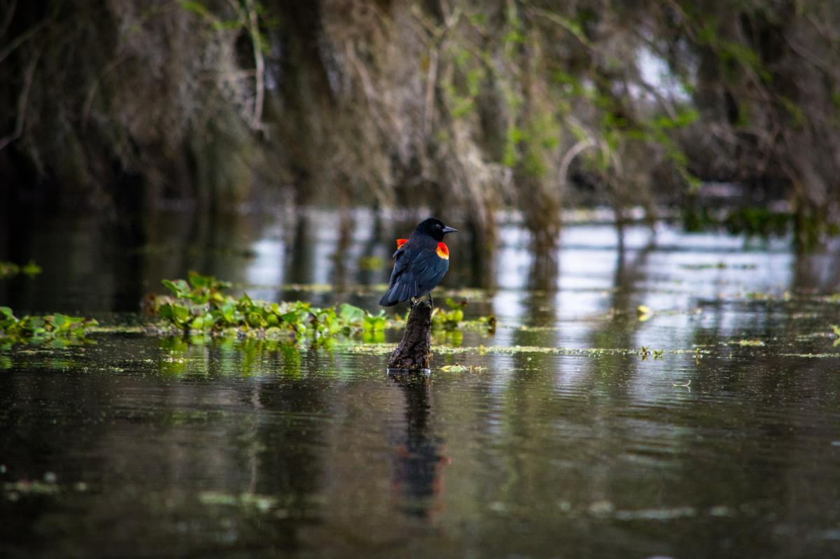 Lake Martin - Birding