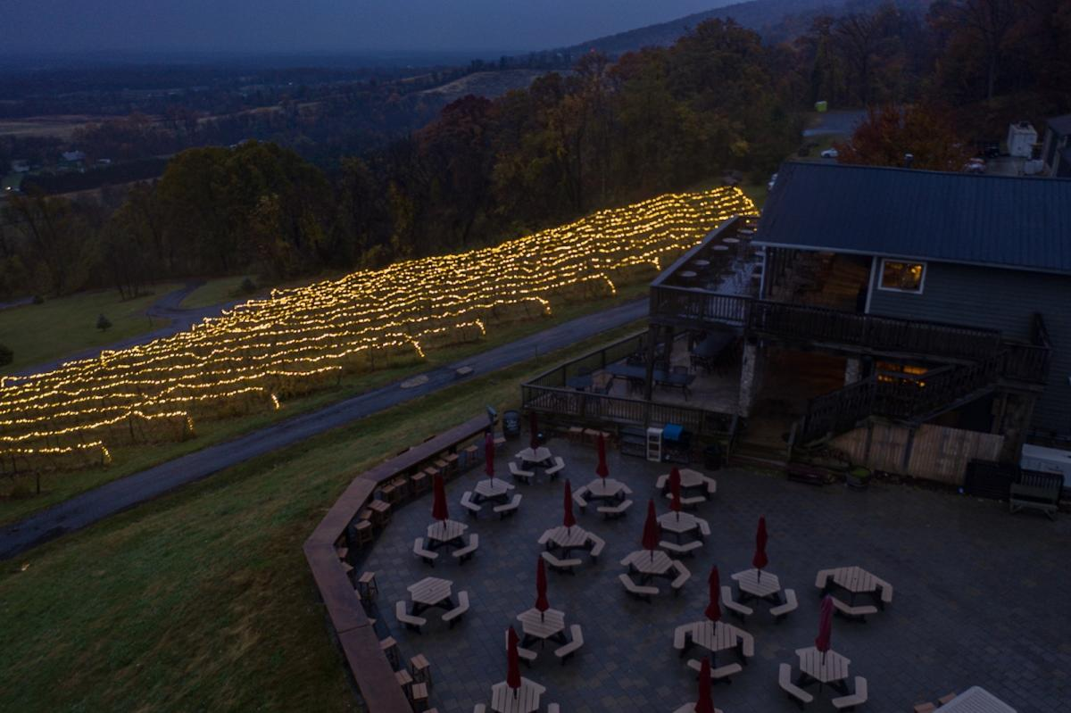 Vines at Bluemont Vineyard covered in holiday twinkle lights