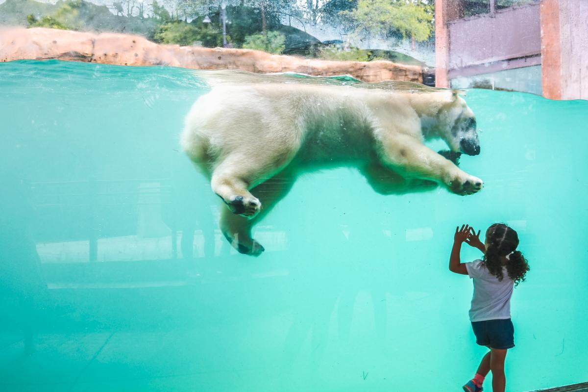 Child and Polar Bear at Henry Vilas Zoo