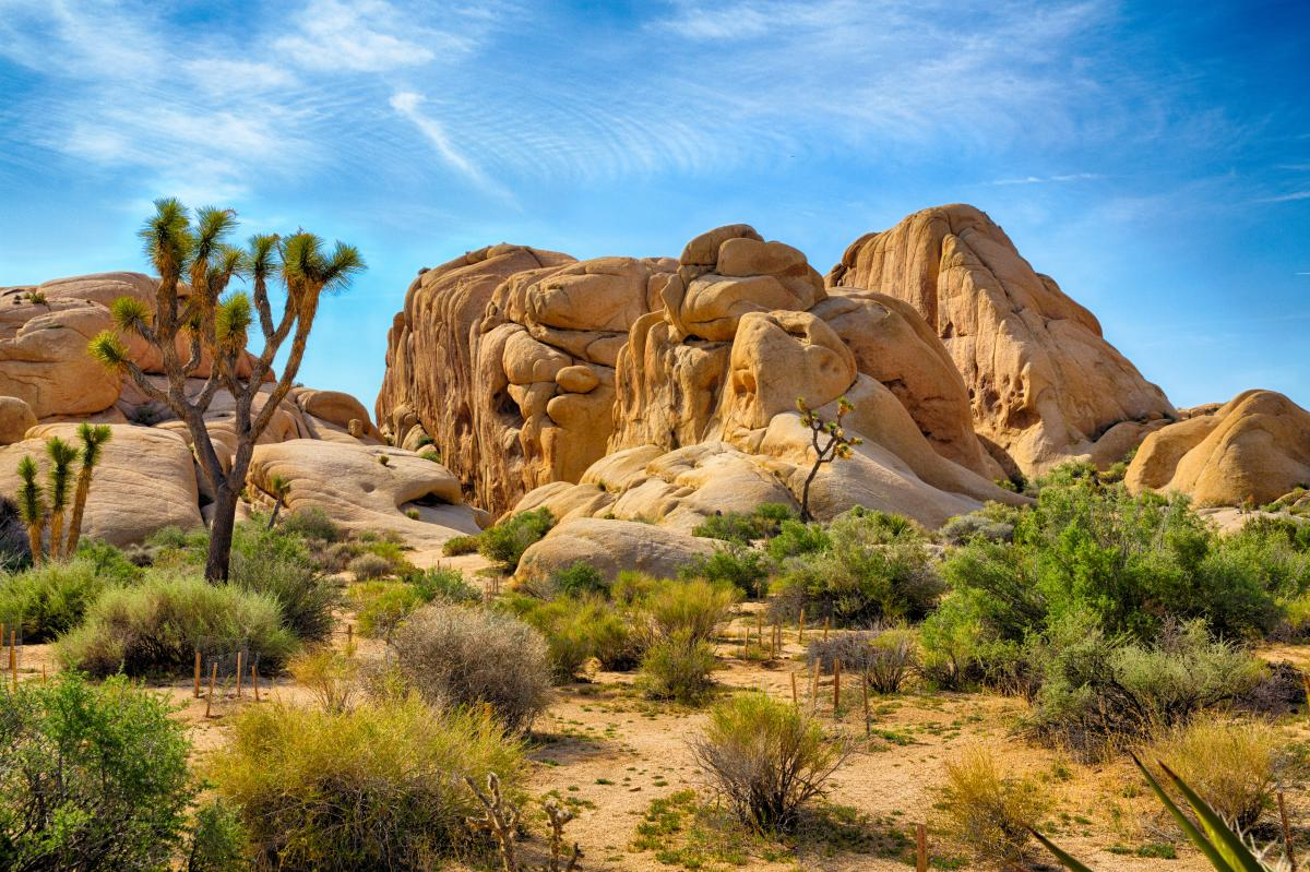 Joshua Tree Rocks and Trees