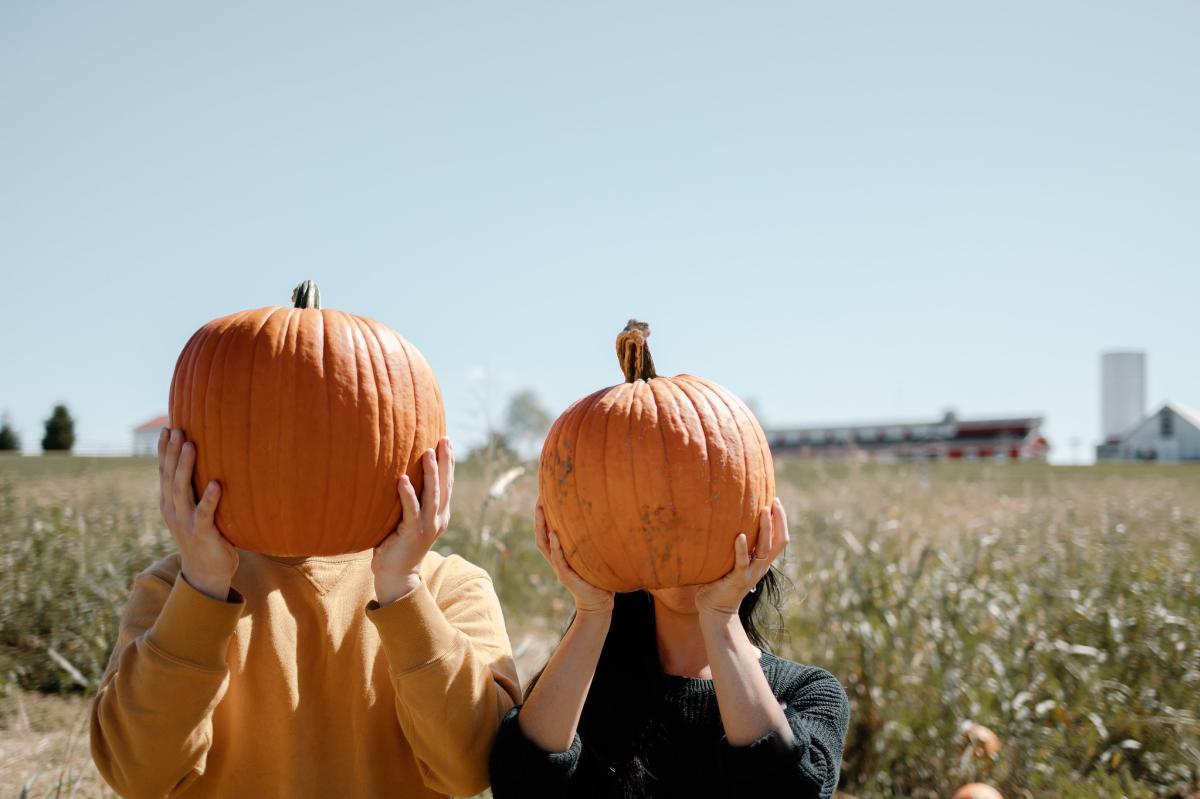 Pumpkins at Rutledge-Wilson Farm Park