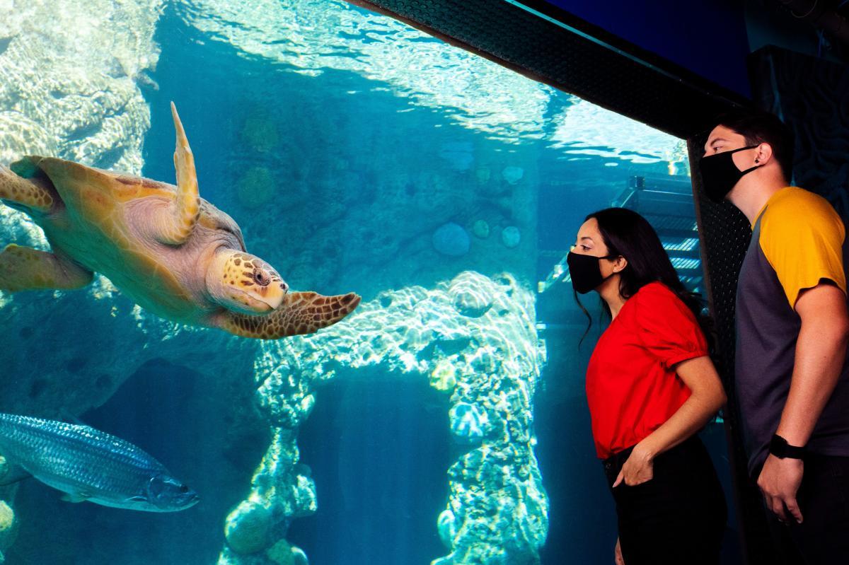 The Florida Aquarium masks