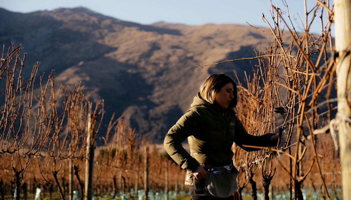 Anika Willner - Pruning in Gibbston