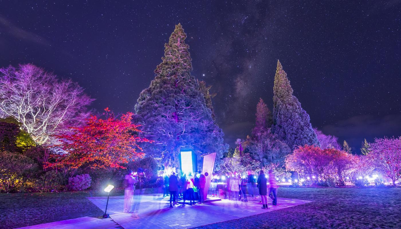LUMA Southern Light Show 2019