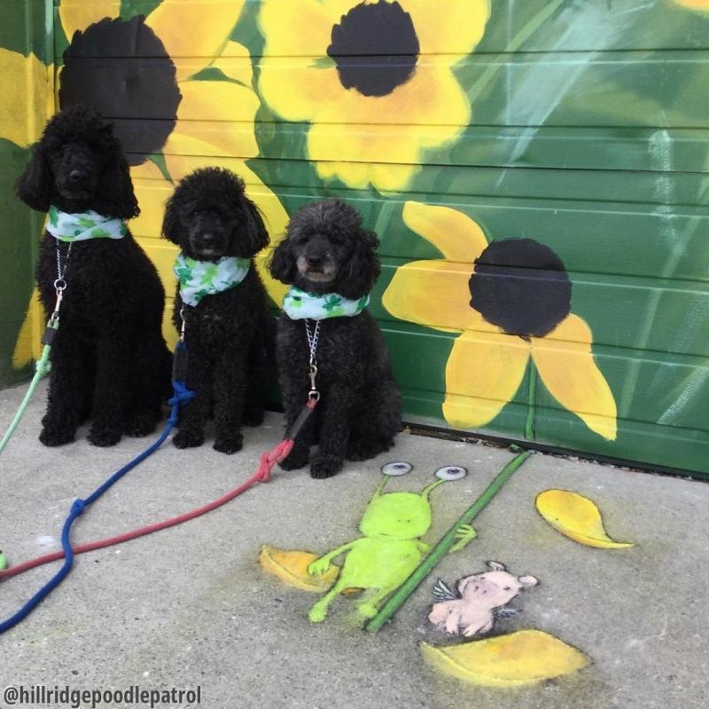 Three dogs David Zinn drawing
