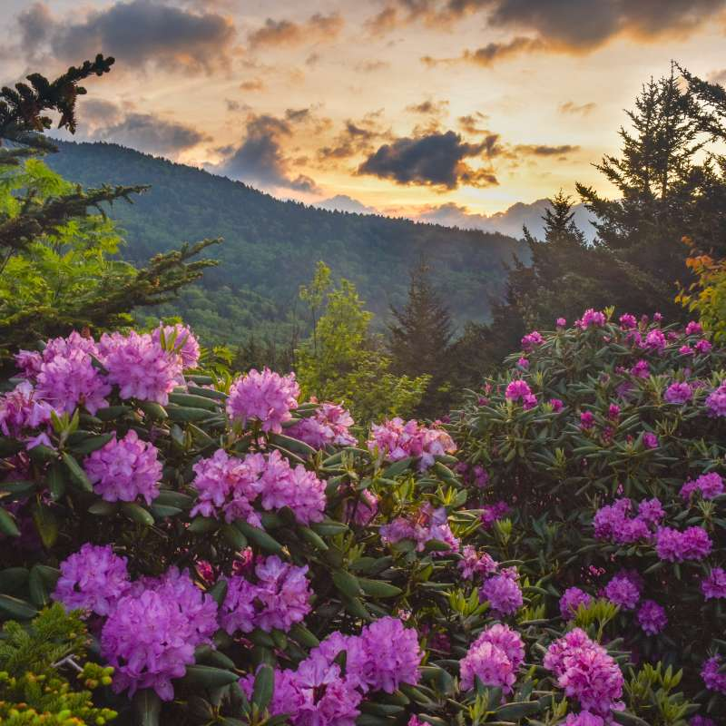 7 Great Places to View Wildflowers in Asheville