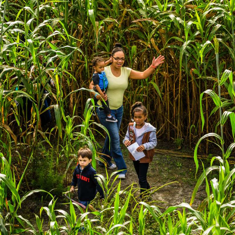 Gallberry Farm Maze