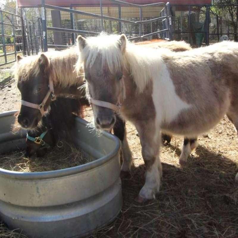 Sweet valley Ponys