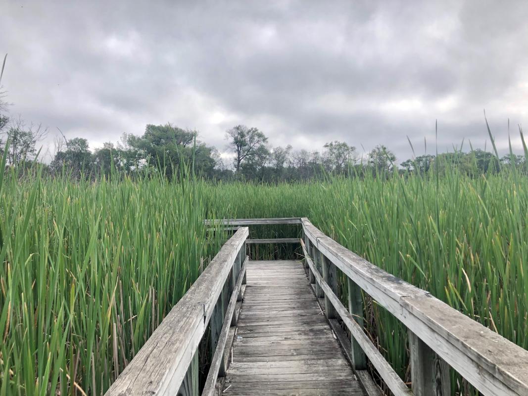 UW Arboretum Gardner Marsh
