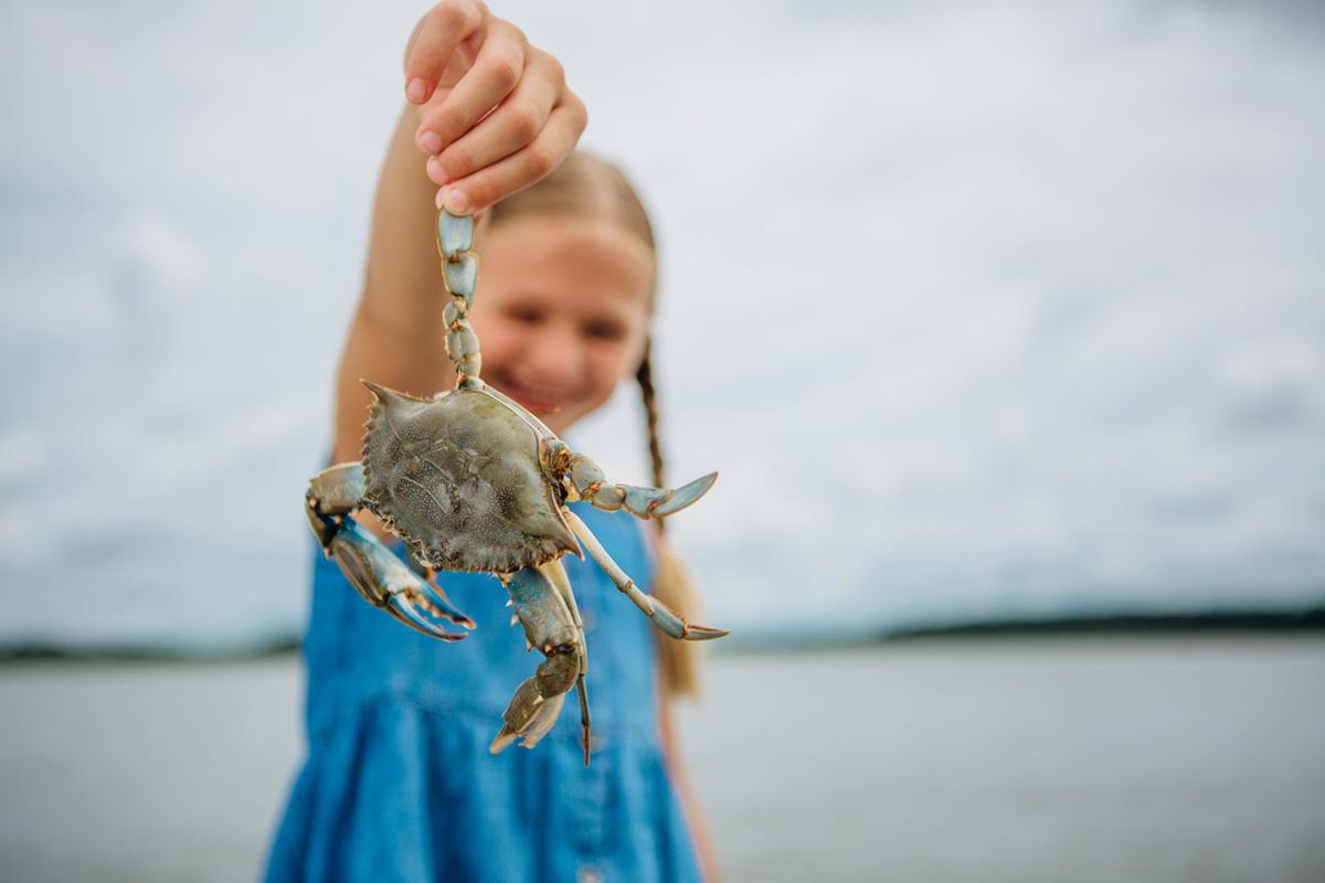 Blue_Crab_web_res