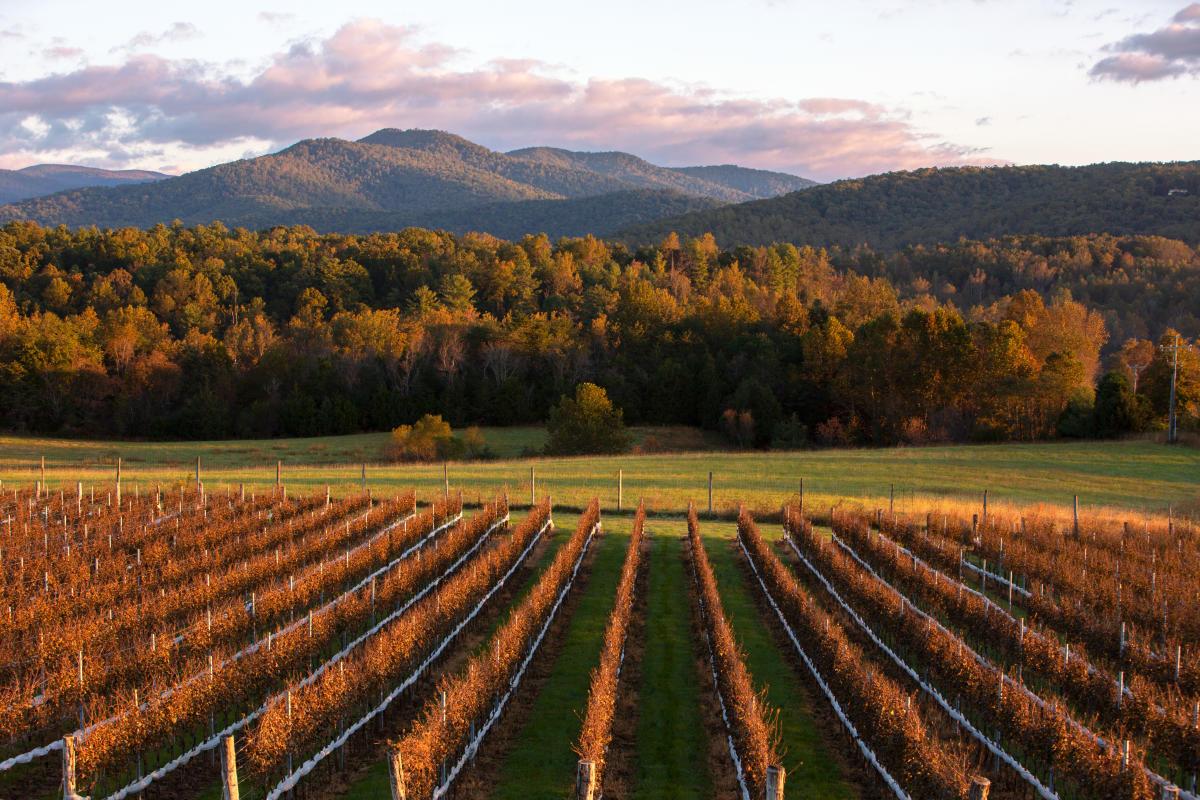 VTC Winery Fall