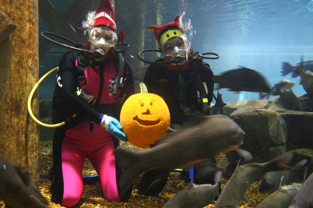 Fall_Tennessee Aquarium Aquascarium