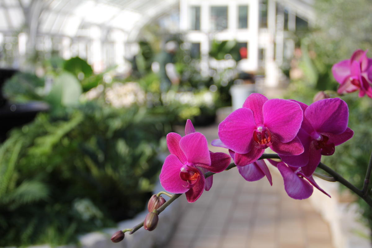 Close up of orchid at Franklin Park Conservatory and Botanical Garden