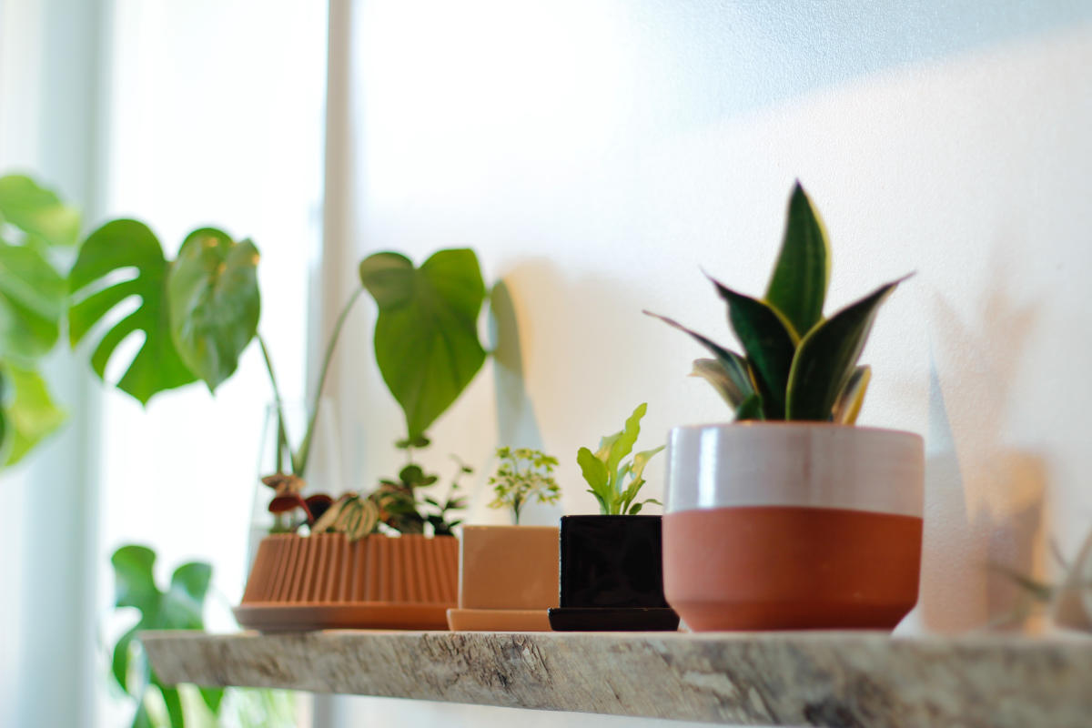 Terracotta planters from STUMP plants