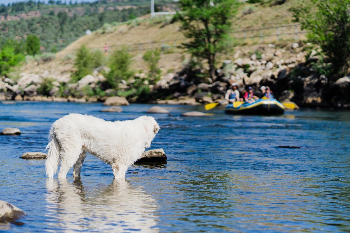 Durango Off-Leash Dog Park, Durango, CO