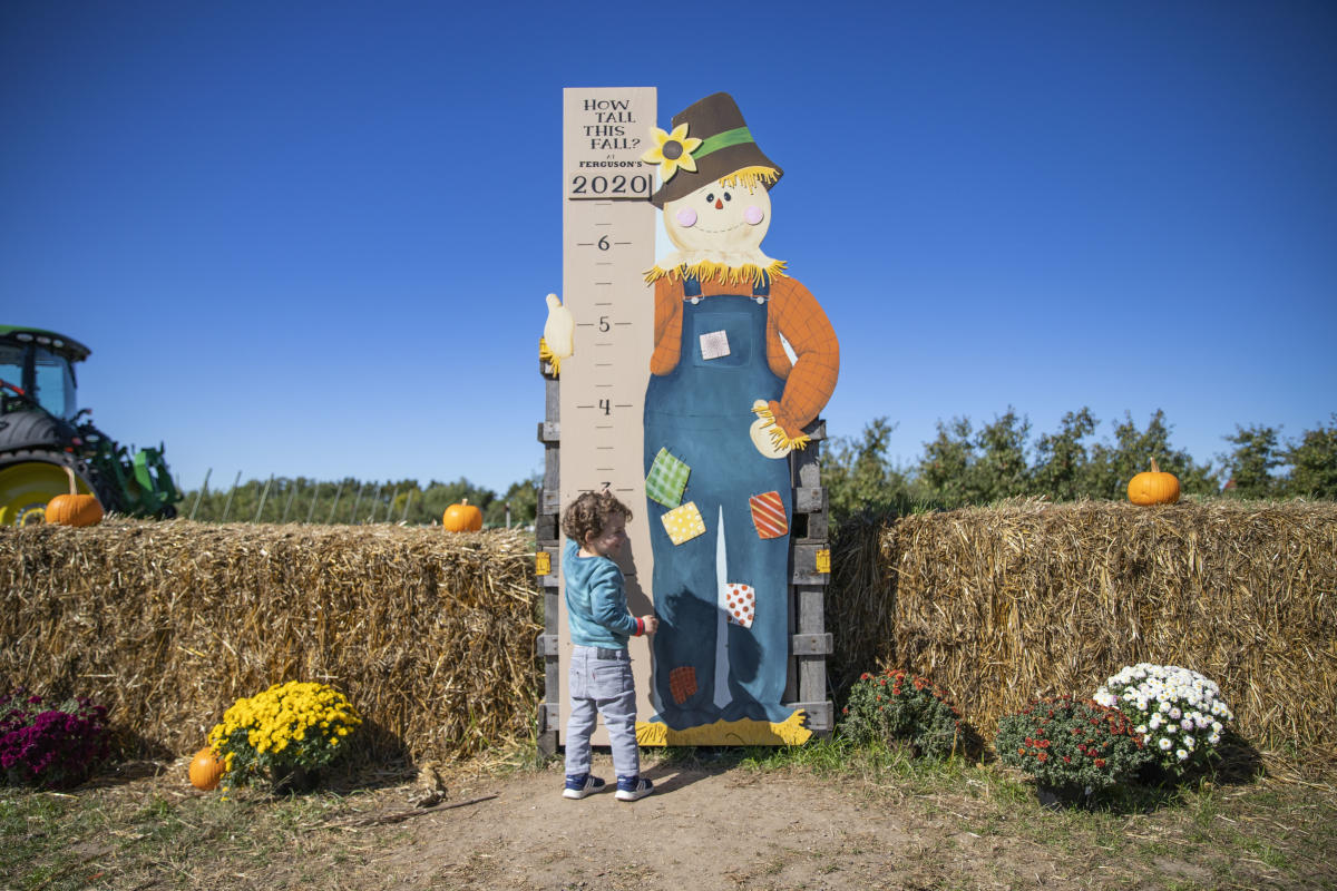 Boy by growth chart at Ferguson's Orchard