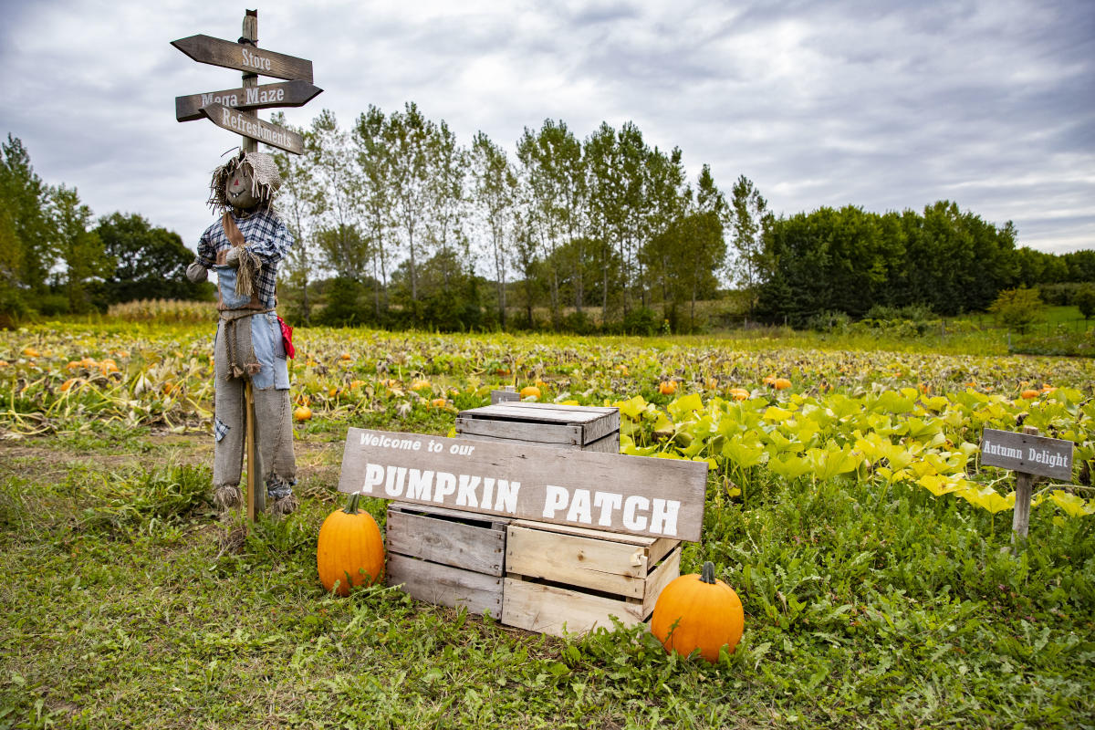 Pumpkin patch at Leffel Roots Orchard