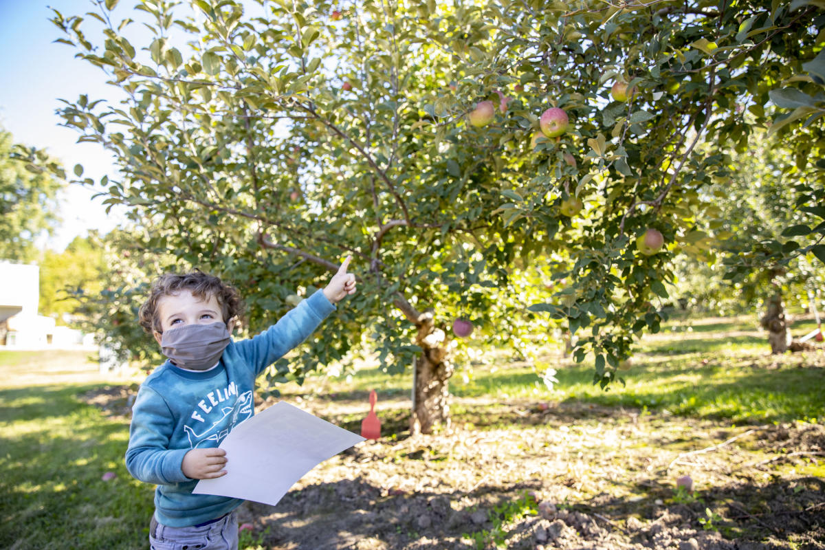 Kid picking apples at the Glass Orchard
