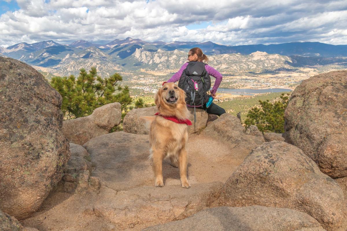 hermit-park-kruger-rock-dog