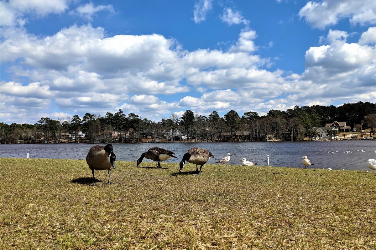 Hope Mills Lake