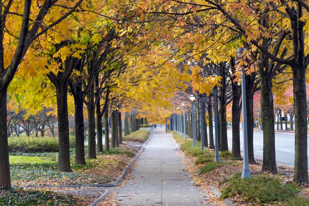 Fall foliage along Clinton Street at Headwaters Park in Fort Wayne.