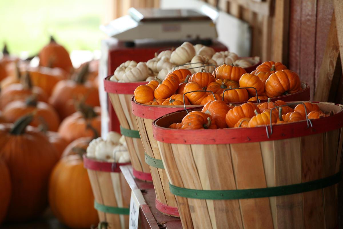 Little orange and white pumpkins in baskets at Vogel Orchard in Fredericksburg TX
