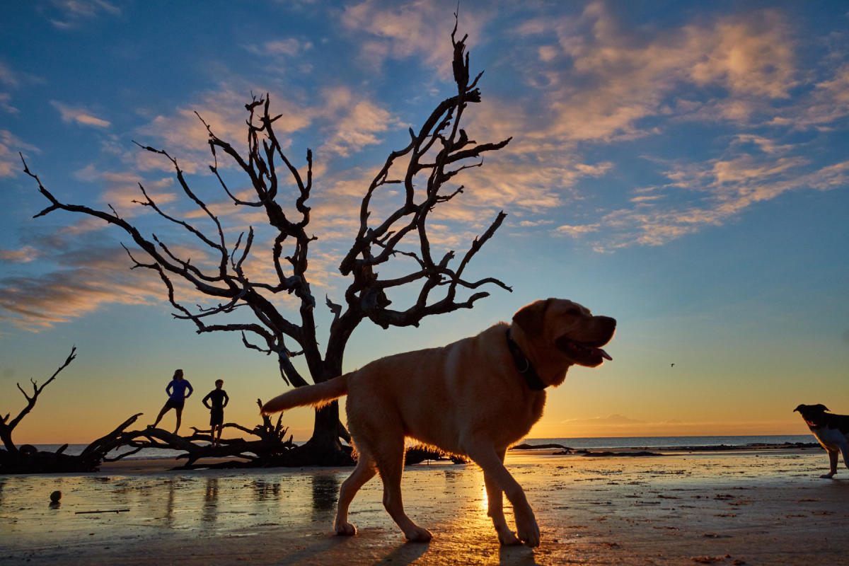 Jekyll Island's famous Driftwood Beach is also a dog-friendly beach in Georgia.