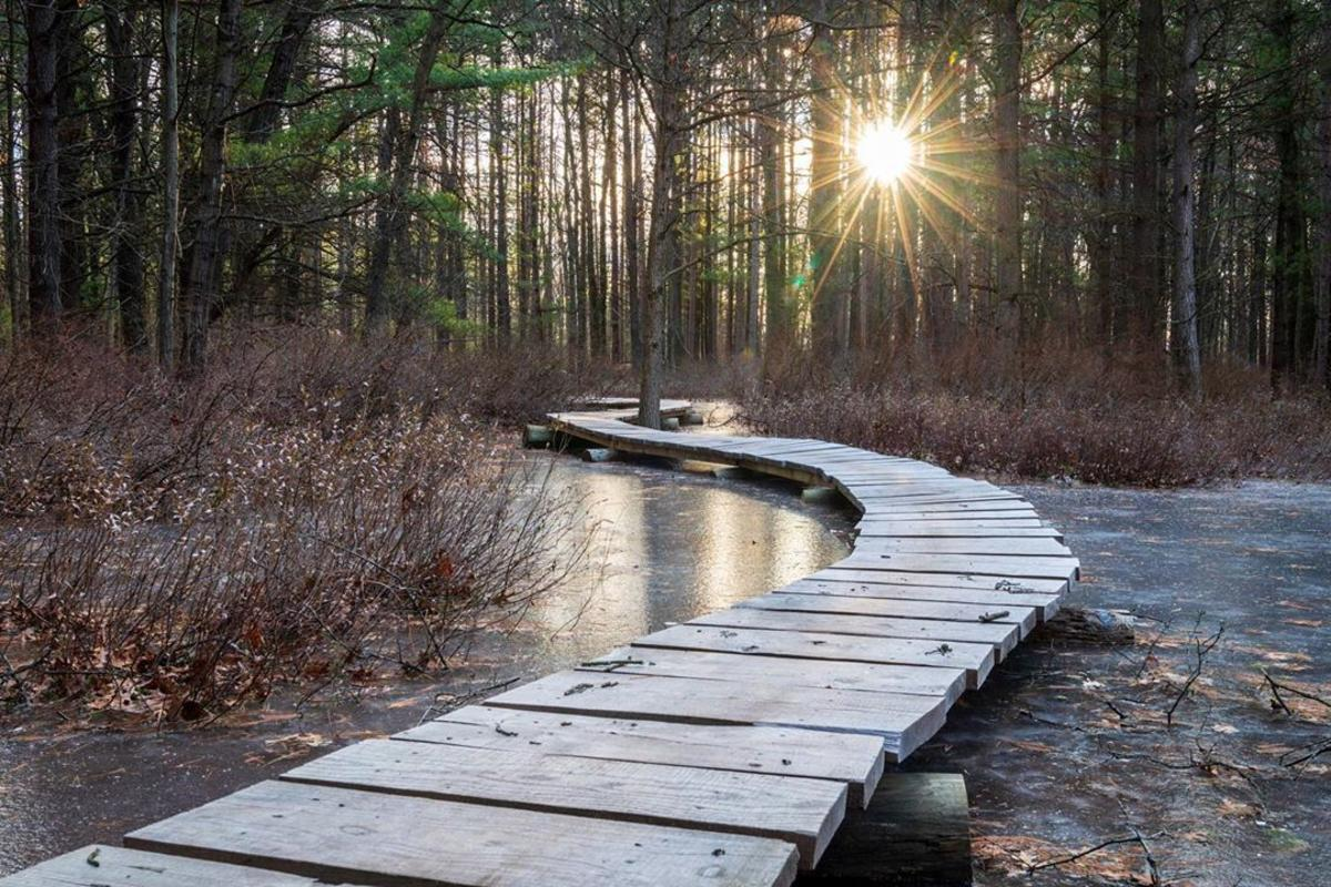 Boardwalk over the frozen water with sun beaming through the trees at Midland City Forest