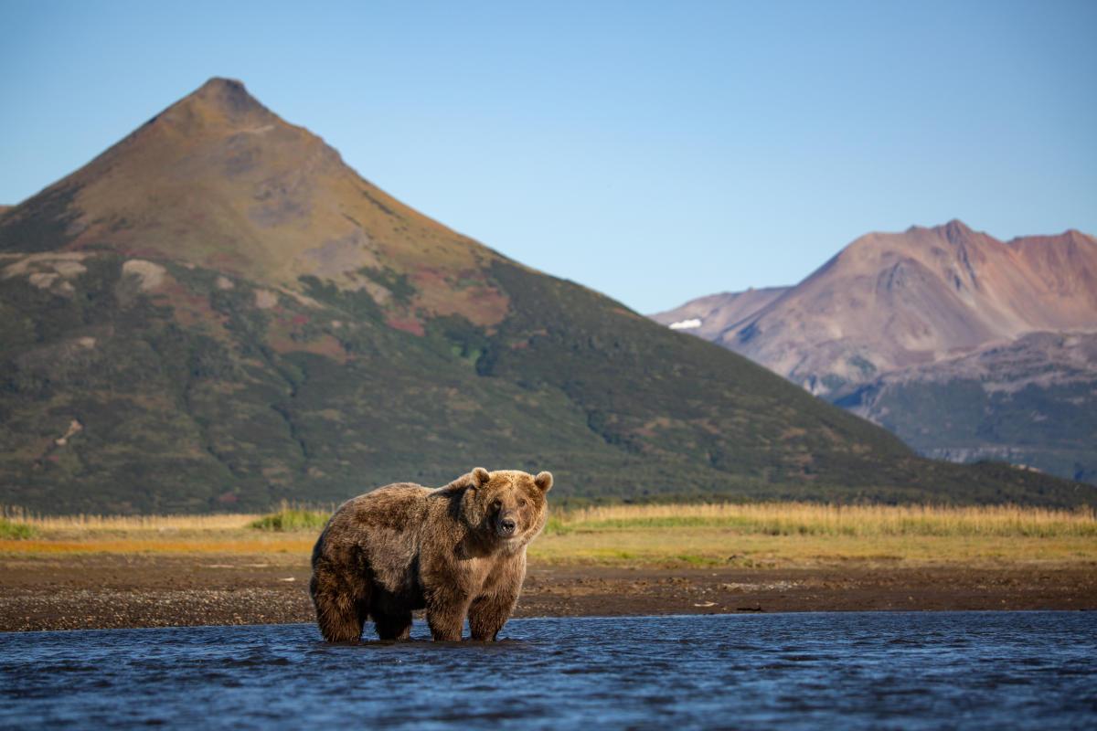 Homer Bear Viewing