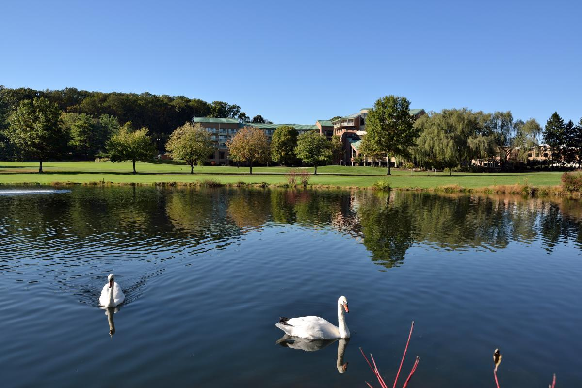 Pond & Swans at Turf Valley