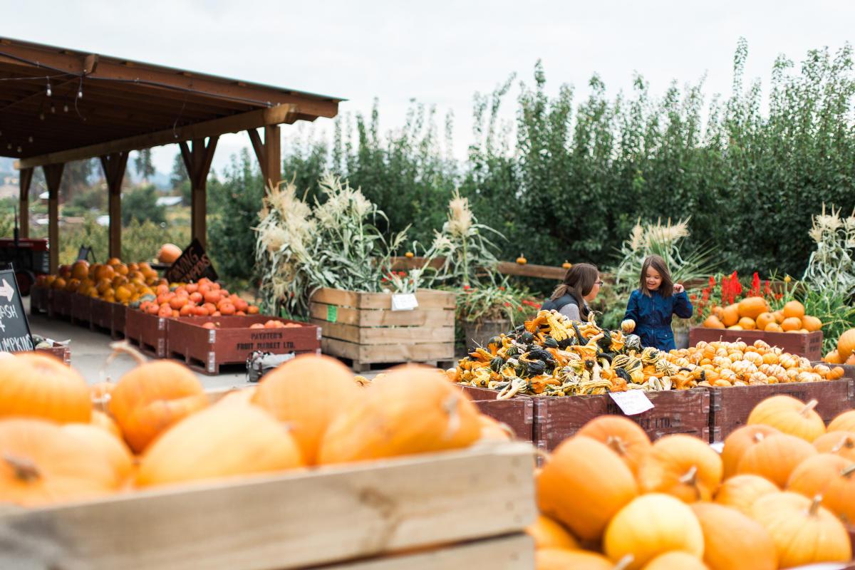 Paynter's Fruit Market - Fall Scene (20)