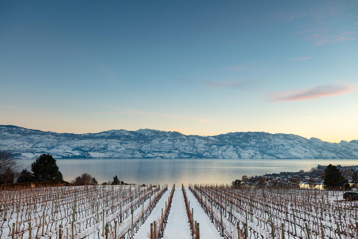 Quails' Gate Winery-Snowy Winter (12)