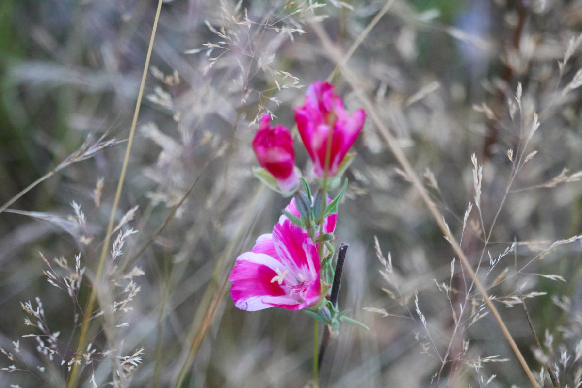 Wildflowers in Juanita Bay