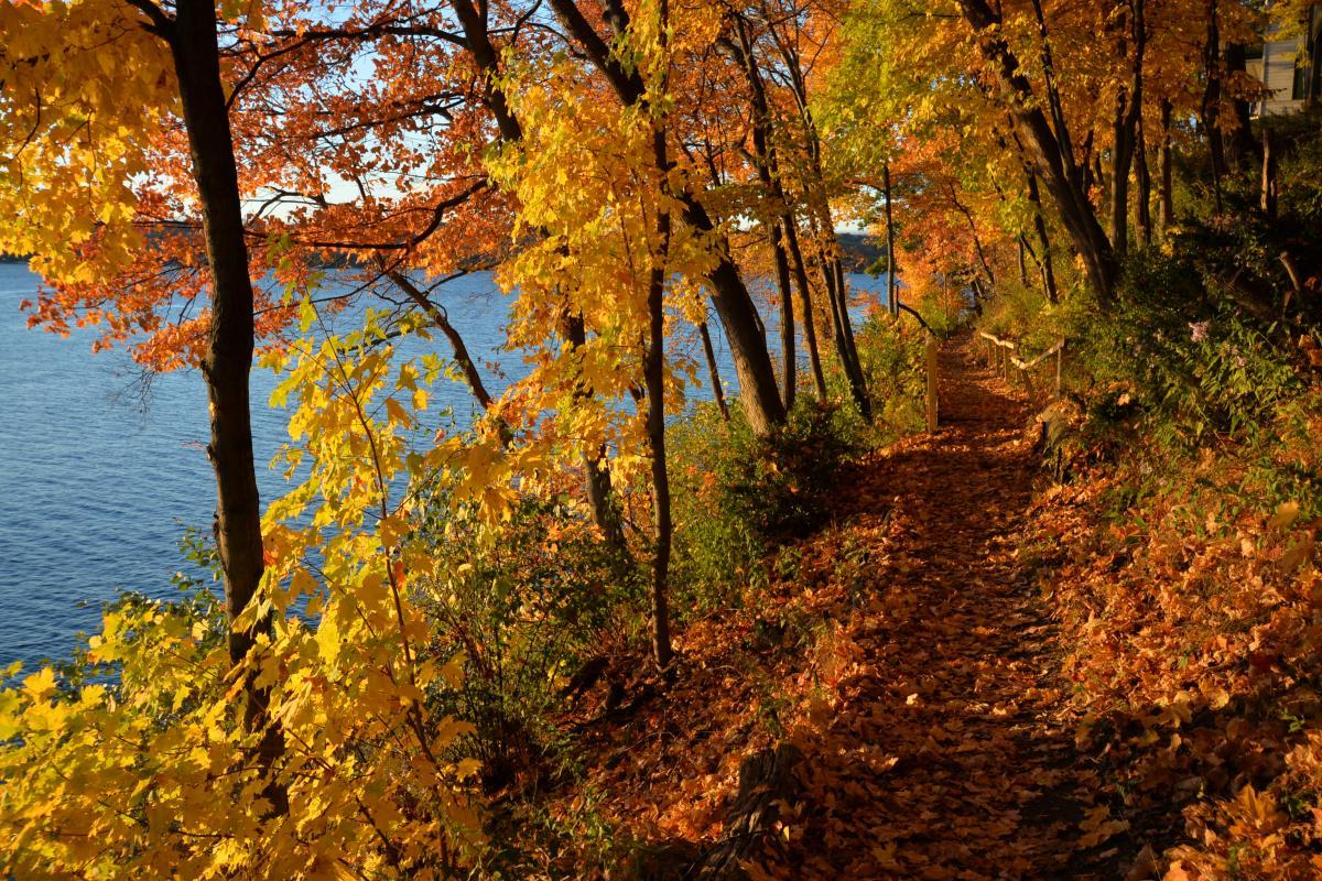Fall Shore Path