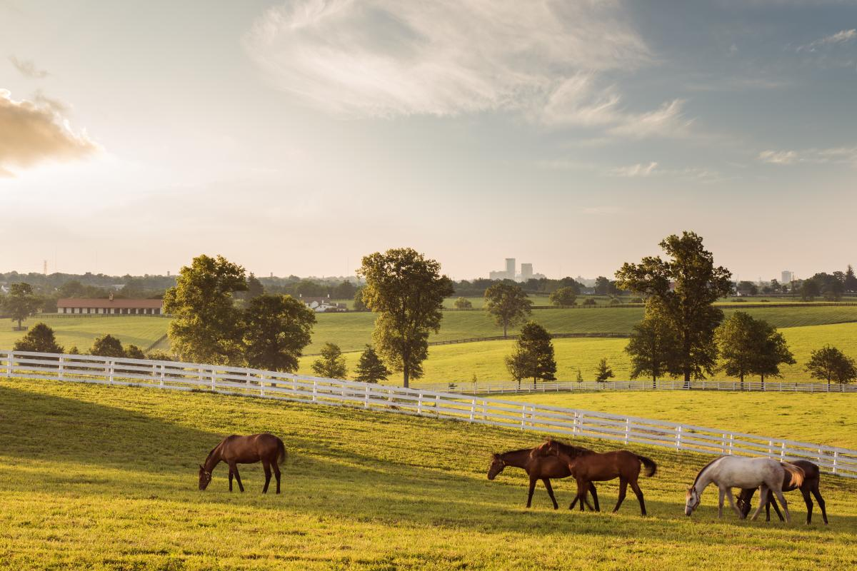 Breathtaking rolling hills and fence-lined pastures.