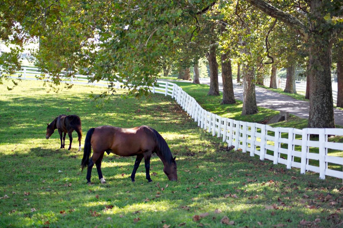 Kentucky Horse Park horses grazing