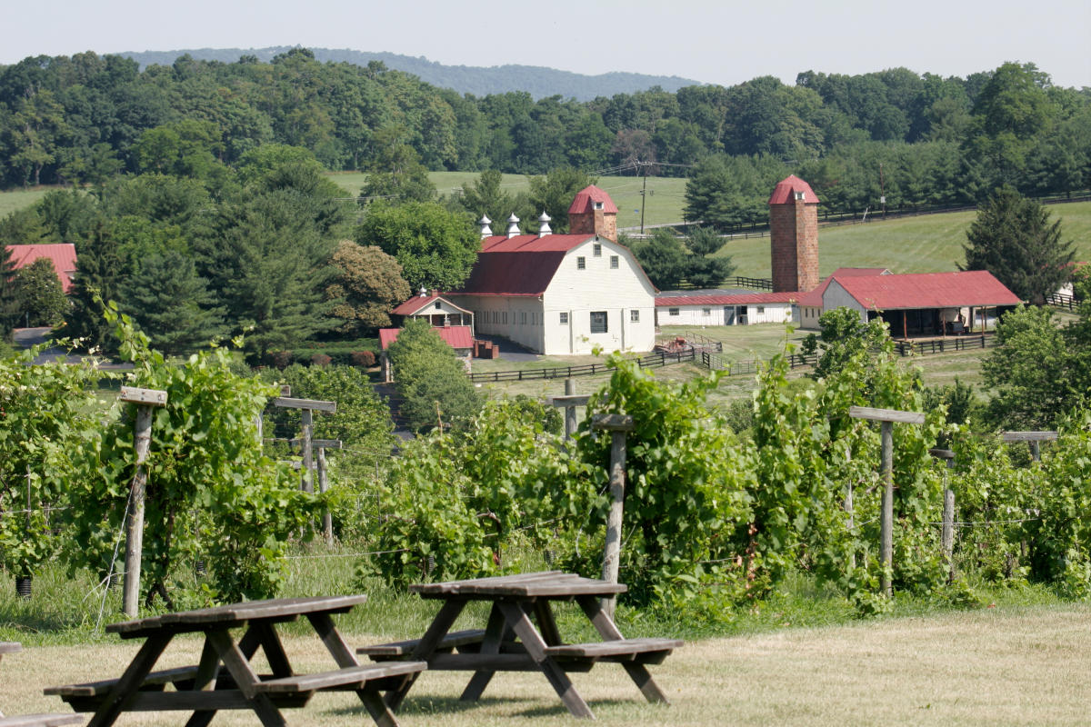 Panoramic view of the Wine Reserve at Waterford with vineyards in the foreground and a large barn and farmhouse set among a wooded area in the background.