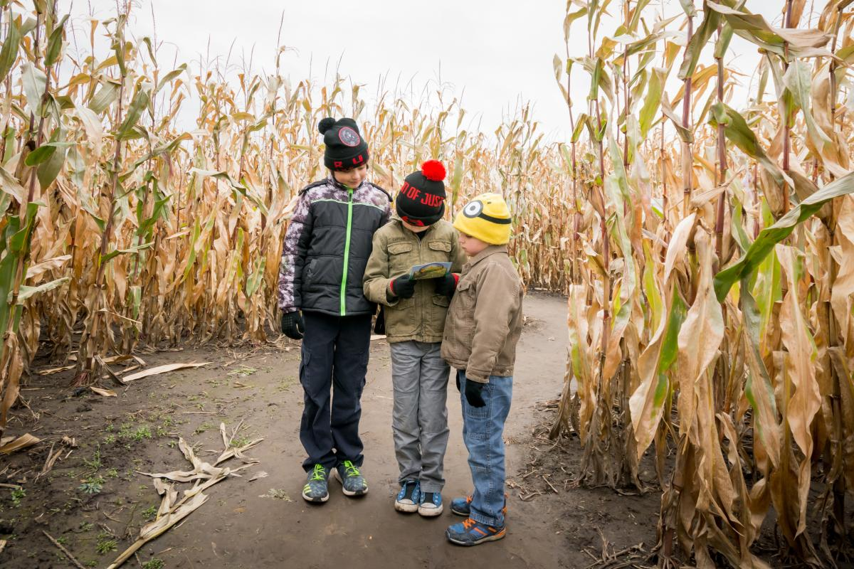 Three kids try to navigate through a corn maze