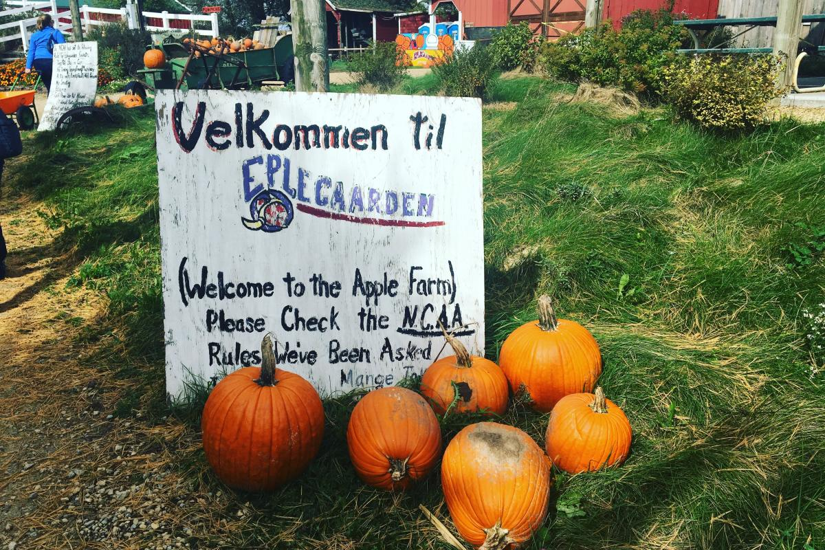 Pumpkins sit in front of a welcome sign at Eplegaarden in Fitchburg