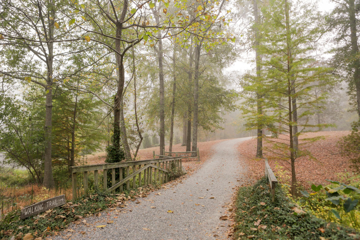 Lockerly Arboretum Fall