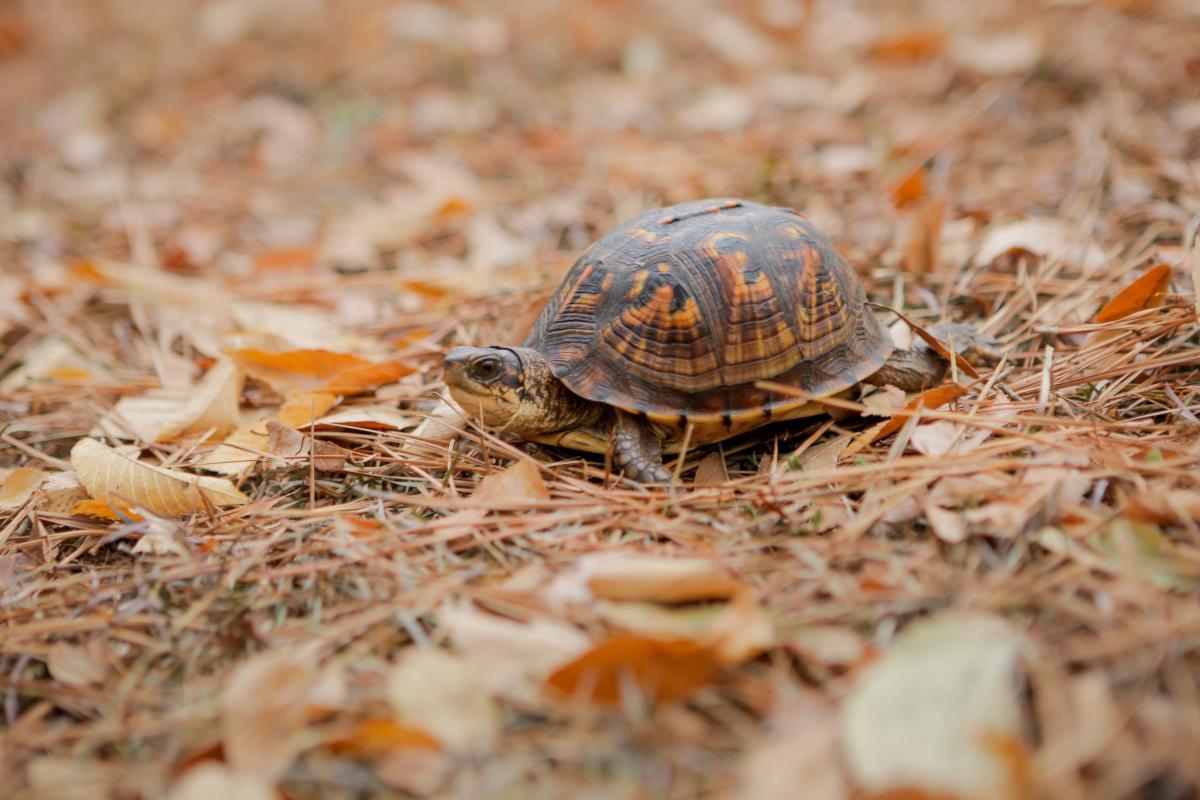 Lockerly Arboretum fall turtle