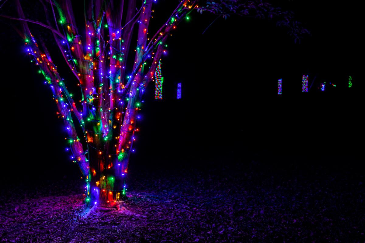 Lockerly in Lights