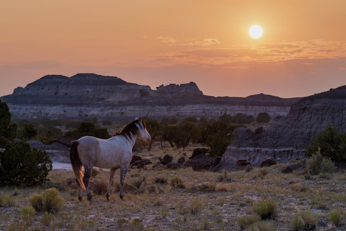 Badlands Horse, Photograph by Jake Werth, New Mexico Magazine