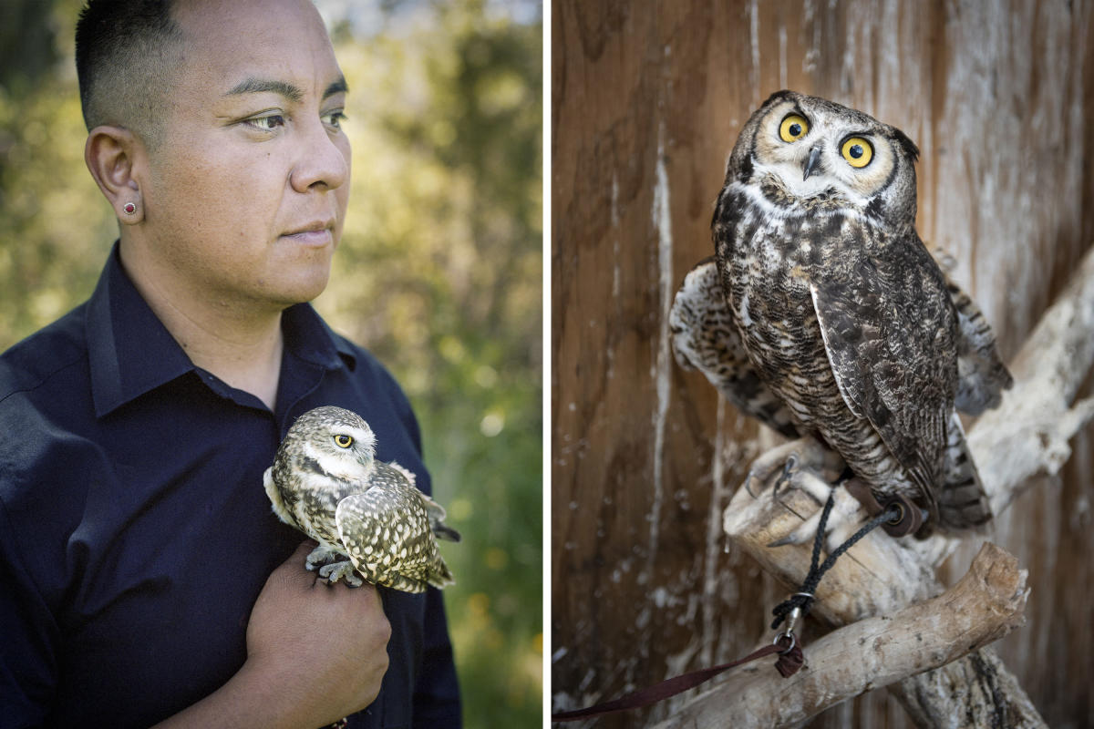Burrowing Owl and Great Horned Owl at Santa Fe Raptor Center