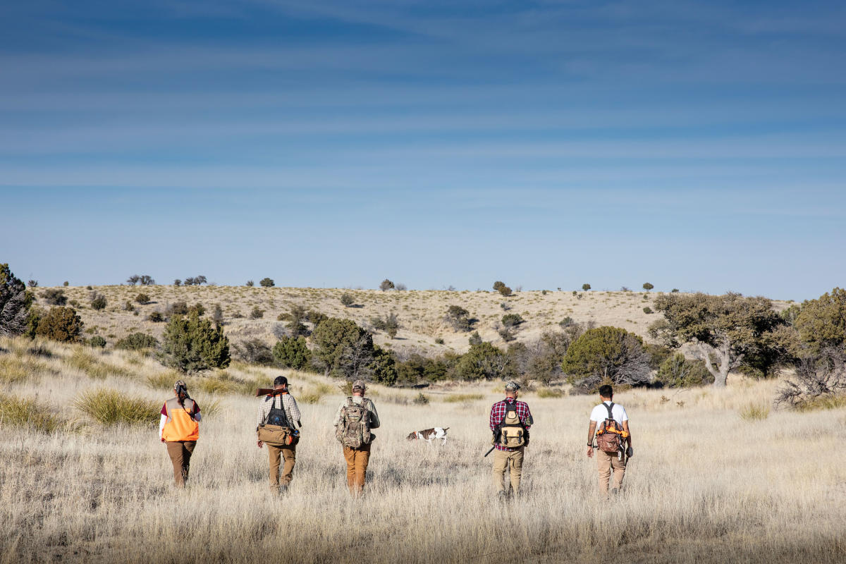Hunting for quail in Questa.