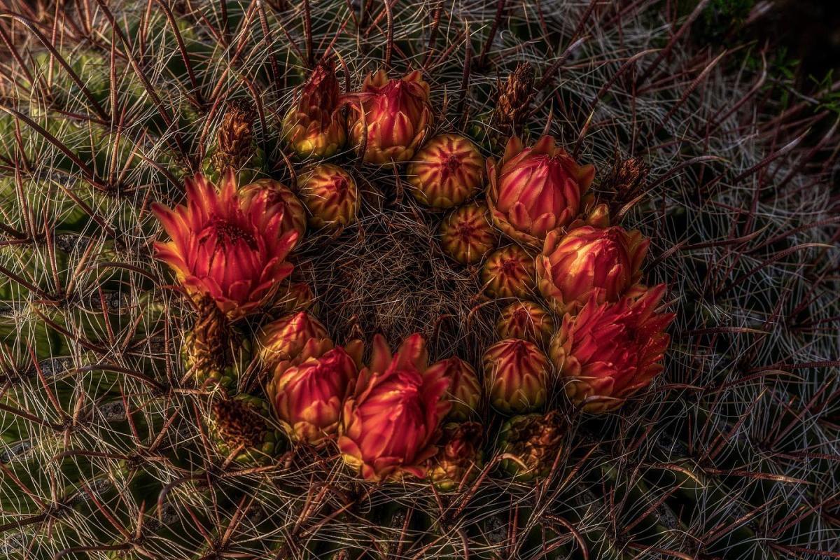 Cactus Instagram Photo Contest
